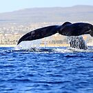Whale Tail by Steve Small