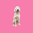 Labradoodle by Louisa Houchen