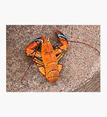 Orange Lobster Photographic Print