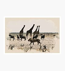 Serengeti Untamed - Wildlife Series - 1 Photographic Print