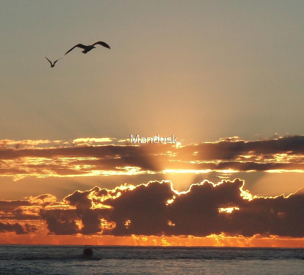 sunrise seagulls by Mandusk