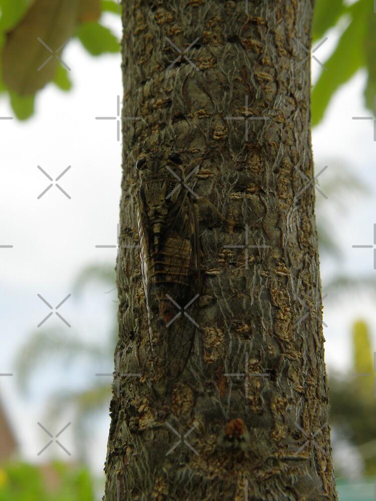 Camoflagued cicada by CapturedByKylie