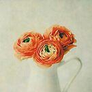 Orange Ranunculus by Nicola  Pearson
