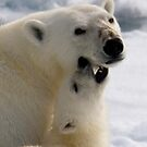 Polar Love - Crop by Steve Bulford