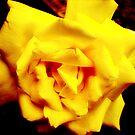 Yellow Delight by erroha