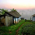 Morning Walk by Igor Zenin