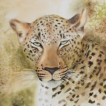 Leopards Gaze by SpiceTree