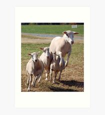 Leaping Sheep Art Print