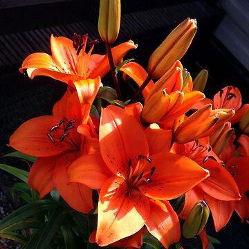Lillies 2 by TonyBroadbent