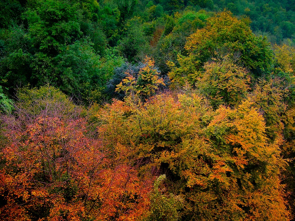 Nature's Colours by Pastis