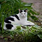 Lucky the Cat by Vincent Vartorella