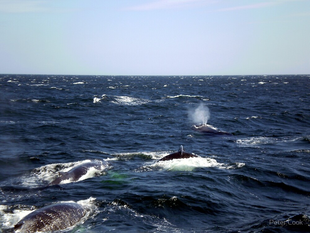 whales by Peter Cook