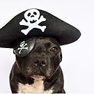 Pirate Dog! by Michelle McMahon