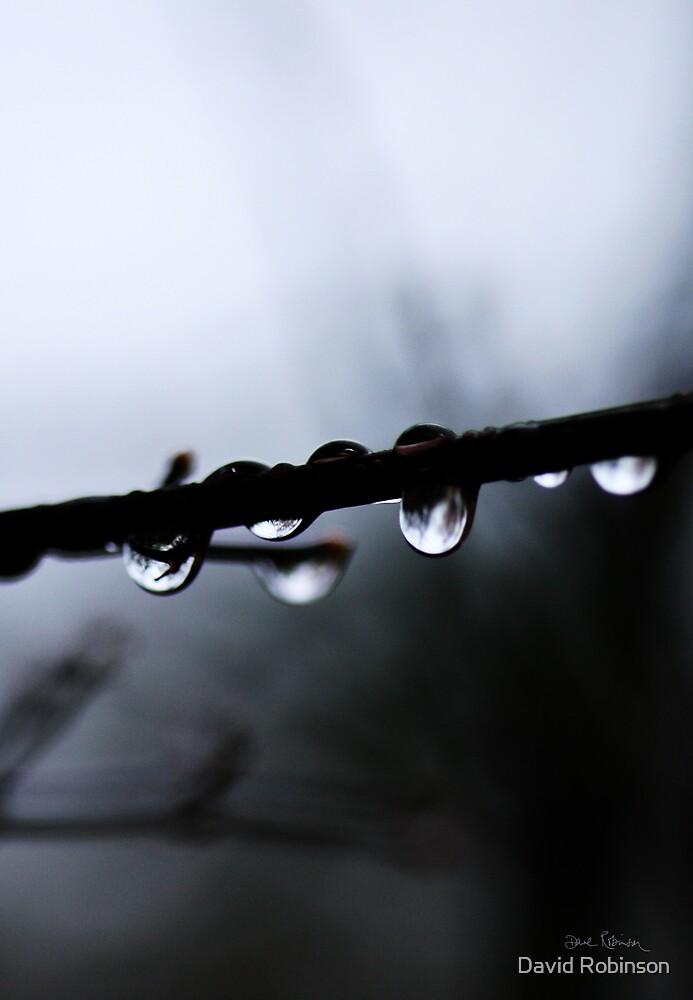 morning rain by David Robinson