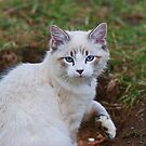 Lovely Domestic Cat by Lynda   McDonald