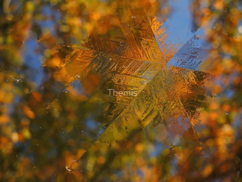 Season overlap by Themis
