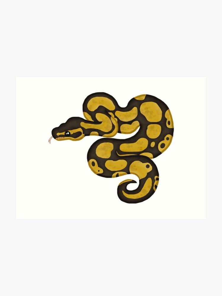 Ball/Royal Python - Normal Morph | Art Print