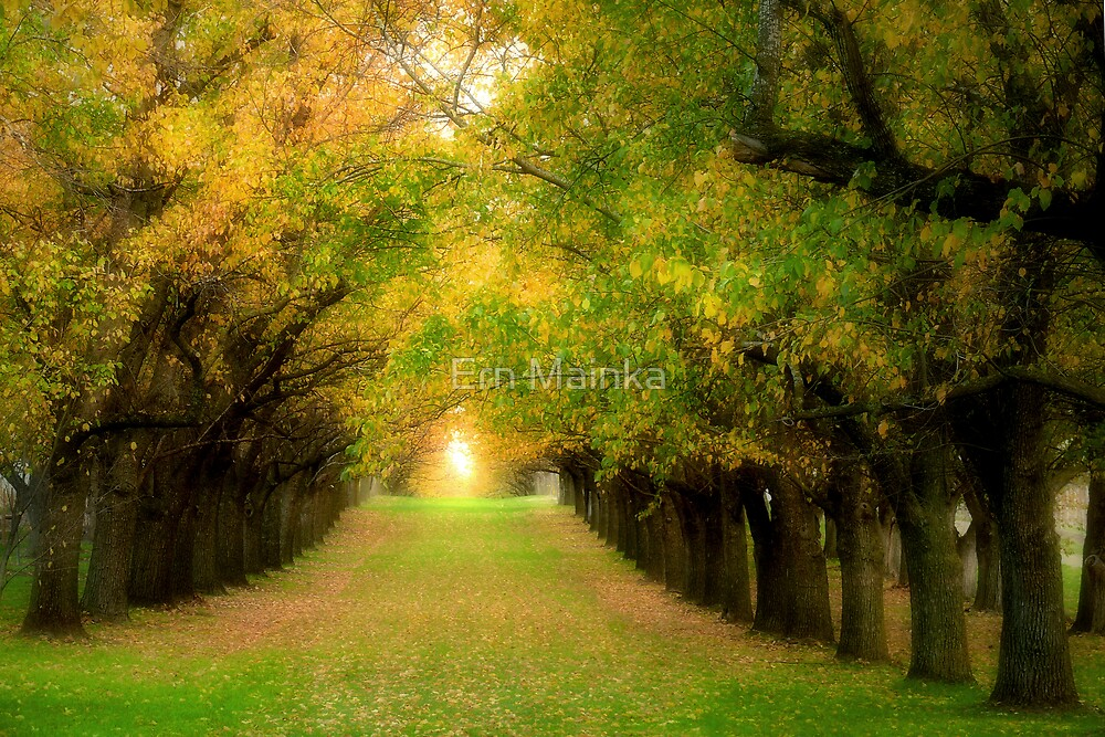 Autumn Elms by Ern Mainka