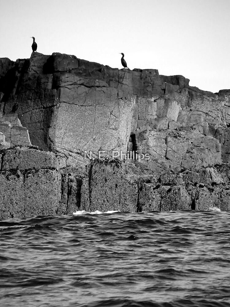 Farne Island Cormorants by N. E. Phillips