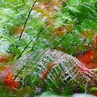Otways Ferns by Harry Oldmeadow