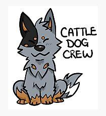 Blue Cattle Dog Crew Photographic Print