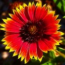 Fire Flower by Virginia N. Fred