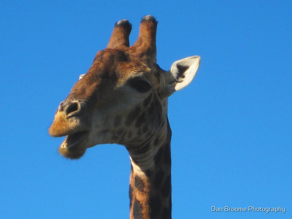 Pensive giraffe by Dan Broome Photography