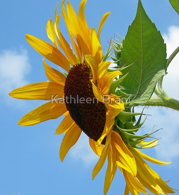 Sunflower in Profile by Kathleen Brant