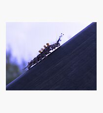 The Climb Photographic Print