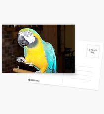 Big Bird Postcards