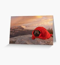 The Wild Mountain Pug Retreats Into Its Shell Greeting Card