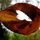 heart leaf by Nicole M. Spaulding