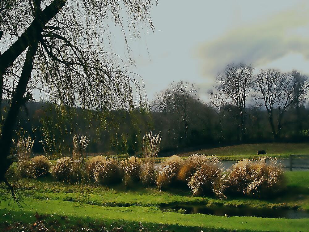 Land to Graze by Judi Taylor