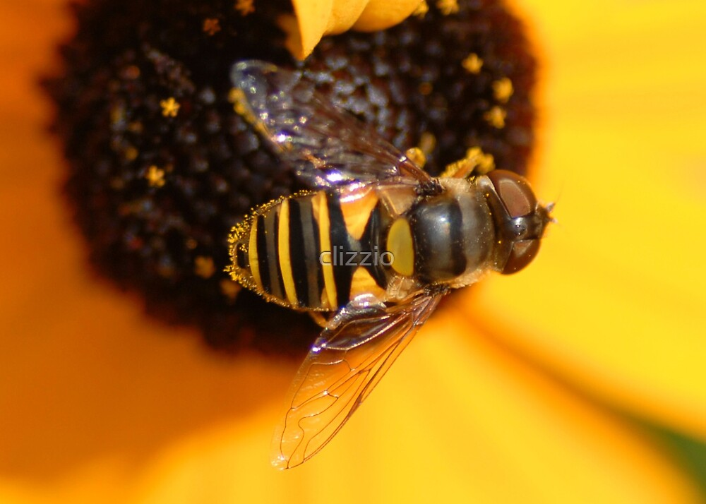 Busy Bee by clizzio
