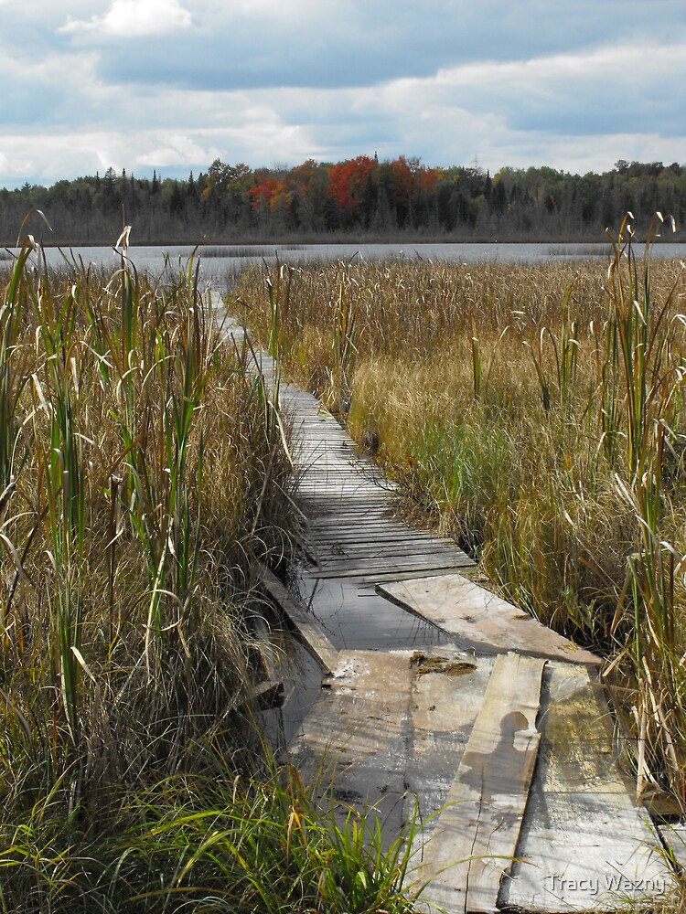 Rotten Lake, Ontario Canada by Tracy Wazny