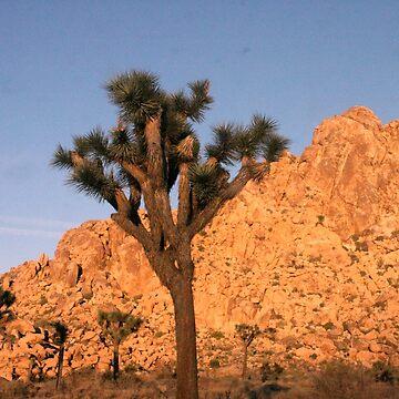Joshua Tree by agnessa38