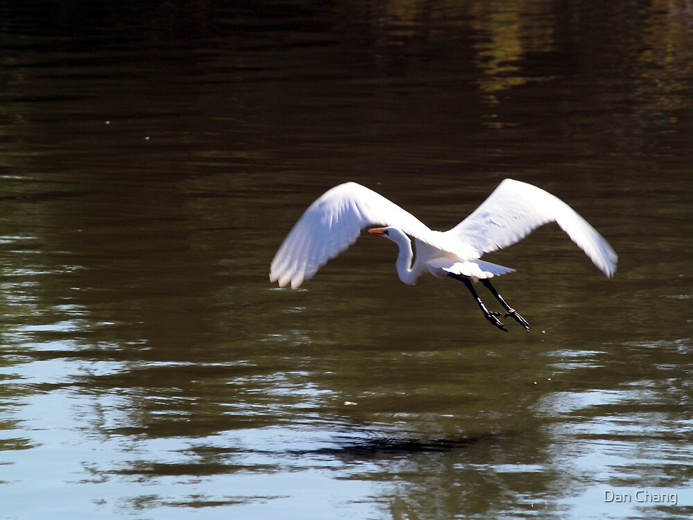 Egret flying away by Dan Chang