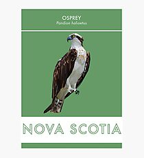 Nova Scotia - Osprey Photographic Print