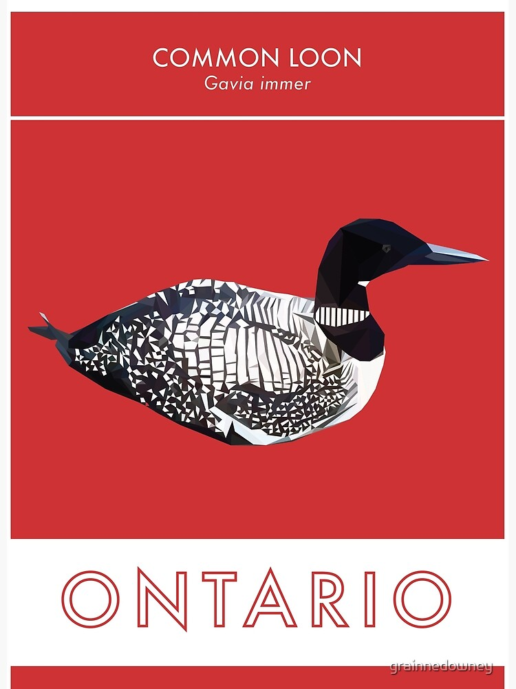 Ontario - Common Loon by grainnedowney