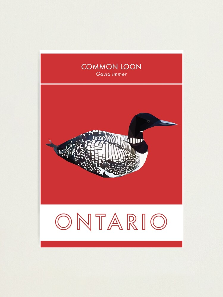 Alternate view of Ontario - Common Loon Photographic Print