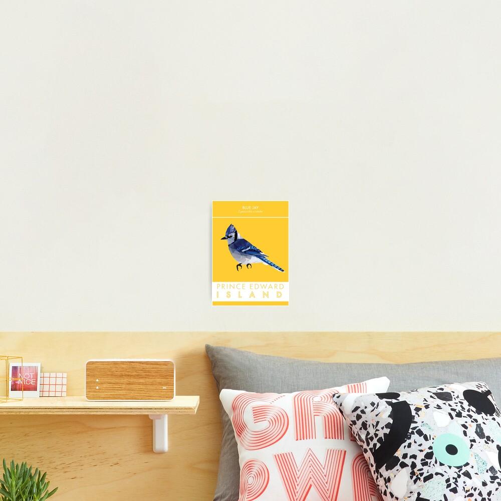 PEI - Blue Jay Photographic Print