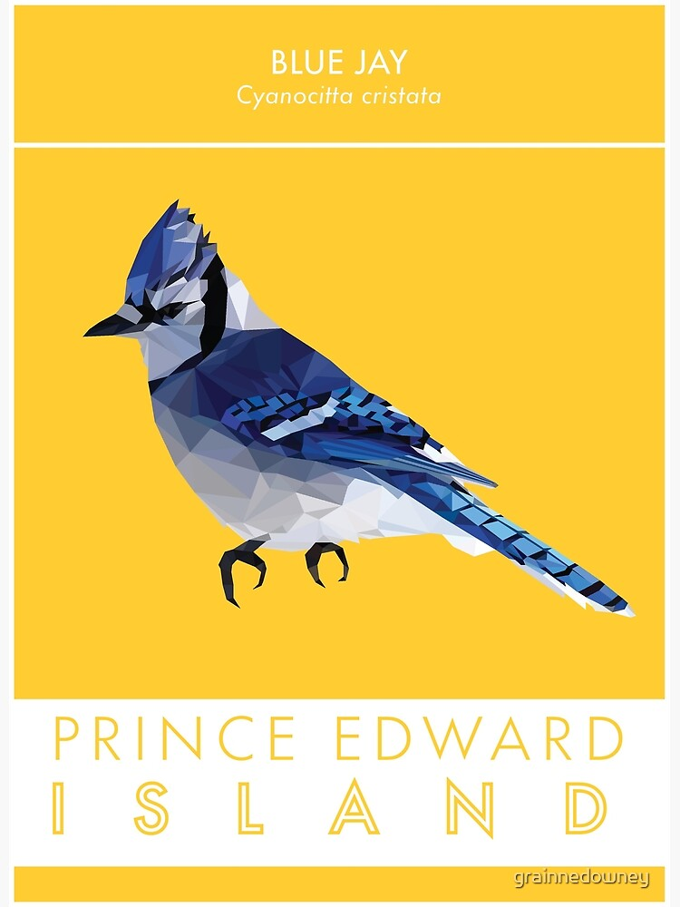 PEI - Blue Jay by grainnedowney