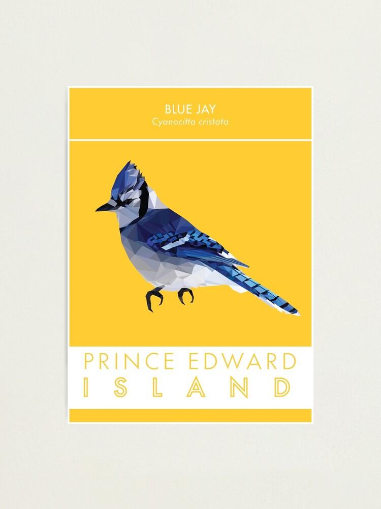 Alternate view of PEI - Blue Jay Photographic Print