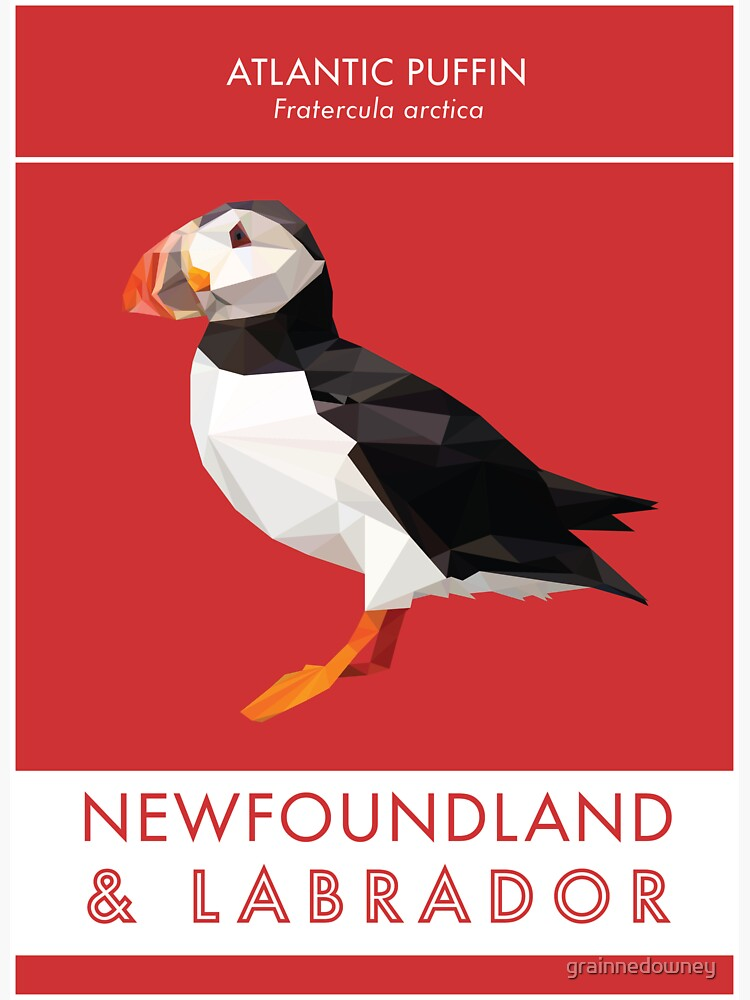 Newfoundland and Labrador - Atlantic Puffin by grainnedowney