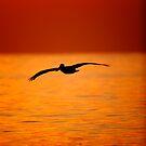 Pelican Silhouette #1 by David Orias