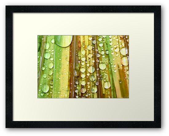 Shower Curtain by Sharon Johnstone