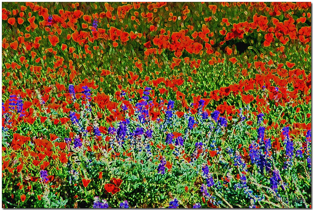 WILD Flowers by Chet  King
