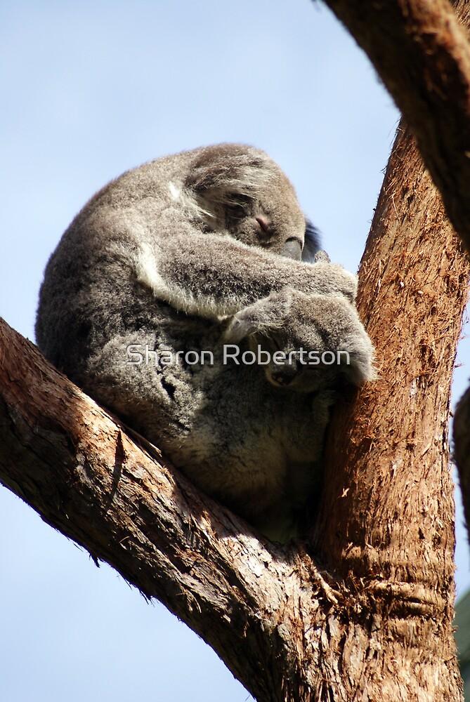 Sleeping Koalas by Sharon Robertson