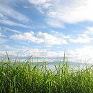 Grass, sky & sea by knomz