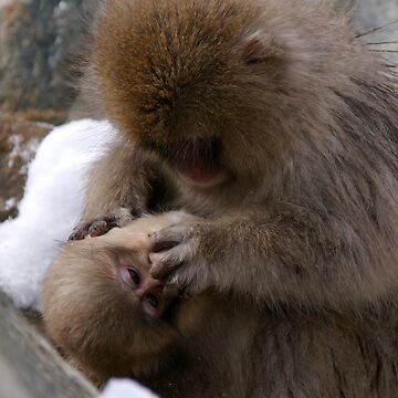 Macaque: Mother and Son by Akira